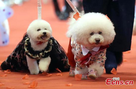 'Group wedding' held for nearly 100 pet dogs