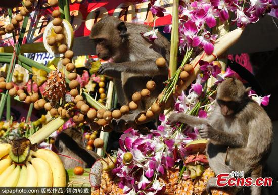 Monkey Buffet Festival celebrated in Thailand