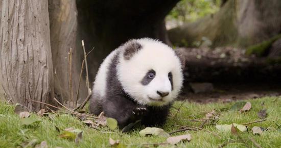 Panda base teams up with Airbnb