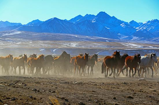 Galloping through China's oldest, largest horse farm
