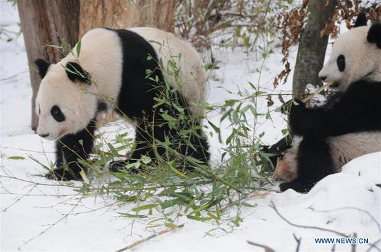 Panda twins at Zoo Vienna to return to China