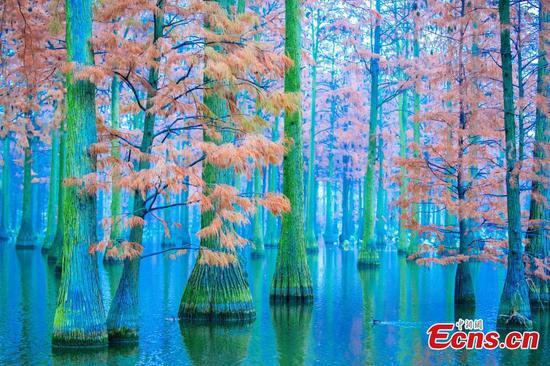 武汉水上森林划船