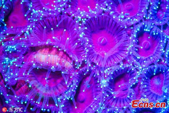 Neon sea creatures light up ocean with vibrant colours