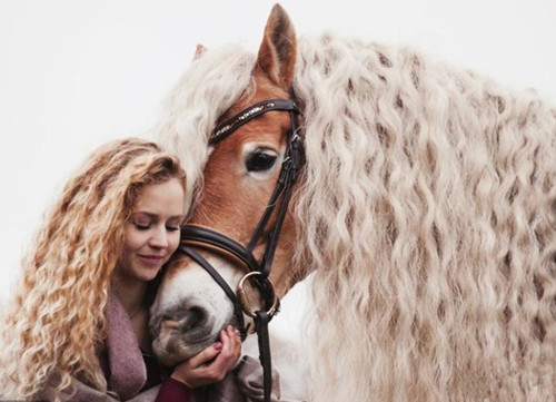 Horse boasts incredible long blonde hair like fairy tale character