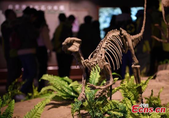 自贡恐龙博物馆拥有大量化石