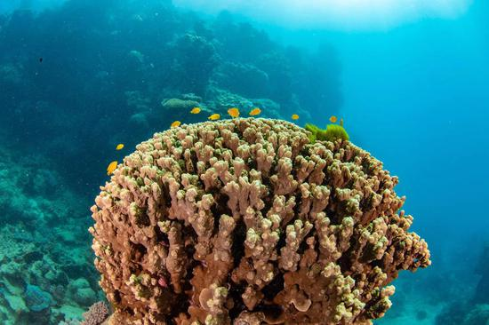 More coral species found in deeper regions of Great Barrier Reef: research