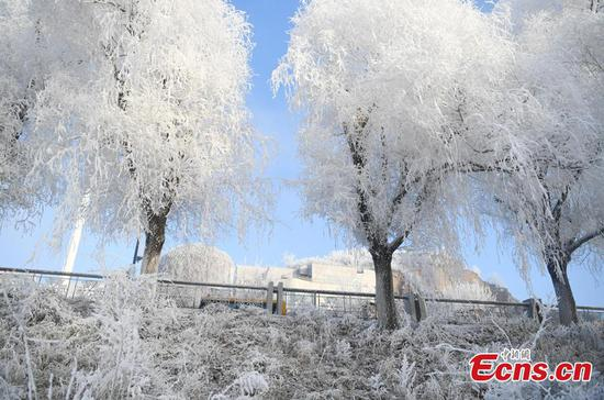 Best time to enjoy rime scenery along Songhuajiang River