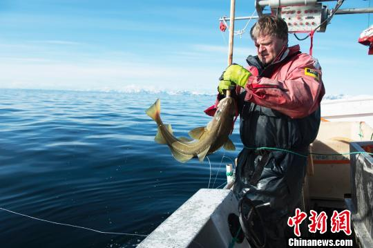 Global warming threatens breeding grounds of cod fish