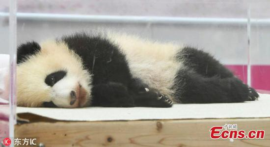 Baby giant panda given name 'Saihin' in Japan