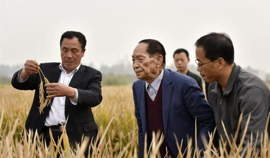 Yuan Longping expects 6.6 million hectares of saltwater-tolerant rice in 10 years