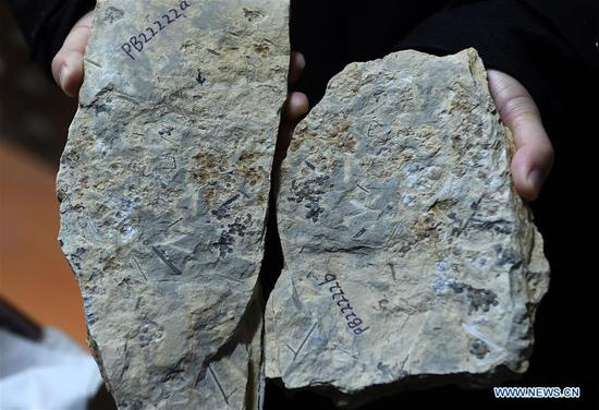 E中国南京出土世界上最早的化石花