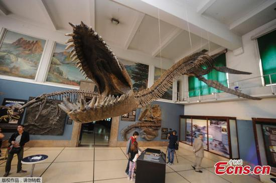 Skeleton of giant marine reptile on show in Buenos Aires