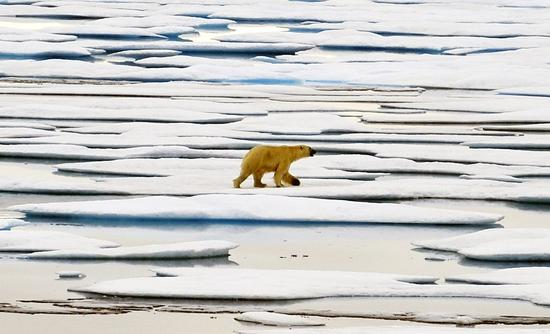 Arctic loses 14,000 tons of water each second: report