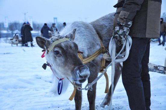 Meet the only tribe in China that breeds reindeer