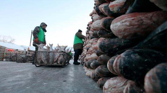 Workers from Chagan Lake Fish Farm in northeast China's Jilin Province packs frozen fish, ready for consumers across China. With the temperature hovering around minus 20 degrees Celsius, fish caught by the giant fishing net freeze only minutes after being pulled out of water. /CGTN Photo