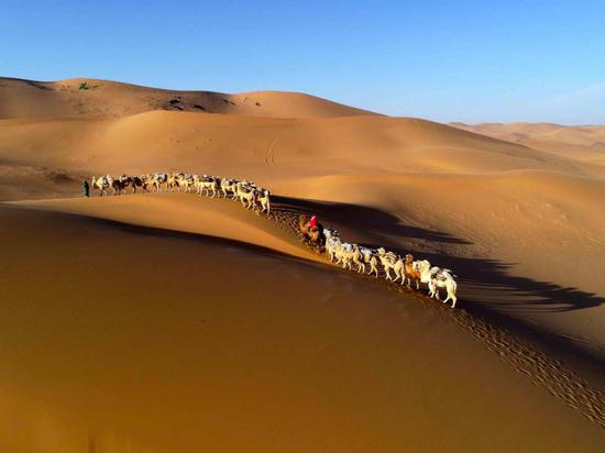 Thousands of camels congregate at Inner Mongolian tourism festival