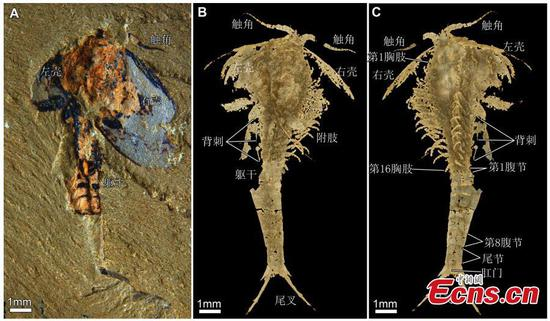 Chinese researchers publish paper on Pancrustacean
