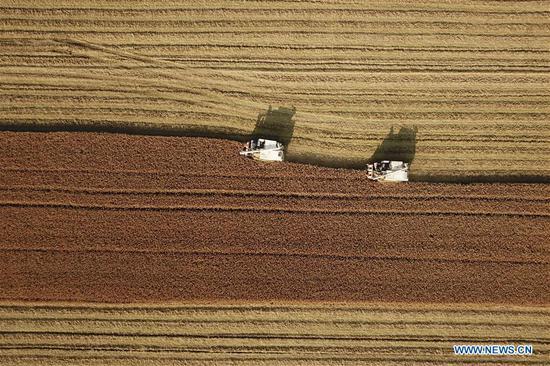 2018年12月13日拍摄的航空照片显示,联合收割机在水果机江苏省淮安市洪泽区的稻田里工作。 (新华社/万镇)