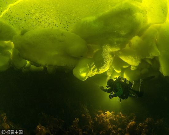 Amazing creatures under ice in White Sea