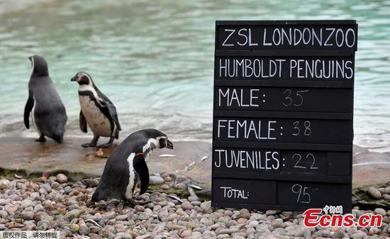 London Zoo starts annual stocktake of animals