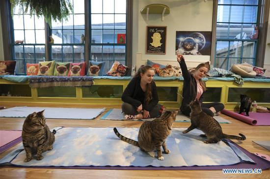 Participants enjoy Yoga with Cats class in Houston