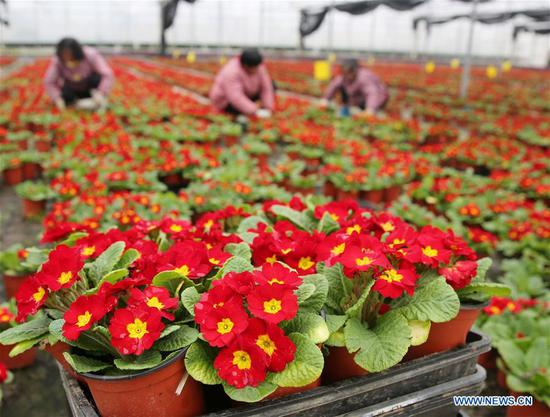 Potted plants enter season of sales in Nantong City, E China's Jiangsu
