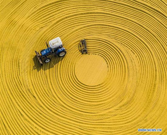 Time to empower China's agricultural sector with artificial intelligence