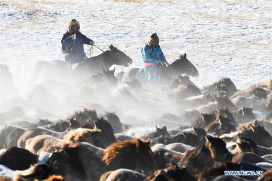 Herdsmen tame horses in north China's Inner Mongolia