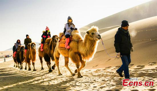 Camel riding a popular choice for tourists to Dunhuang
