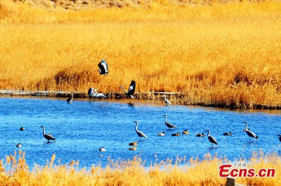 Northwestern wetland home to wild birds