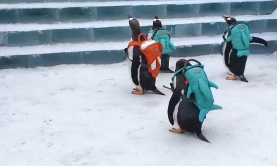 Penguins have fun at Harbin Ice and Snow World