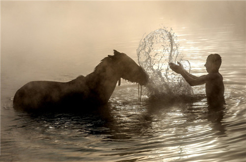 Water buffalos and horses washed in thermal spring in Turkey