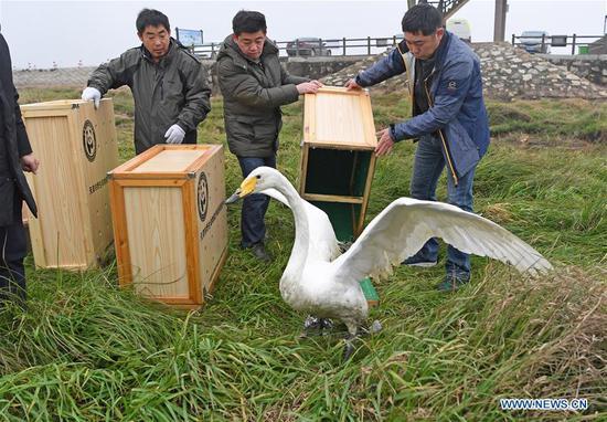 16 rare migrant birds released into wild in Jiangxi