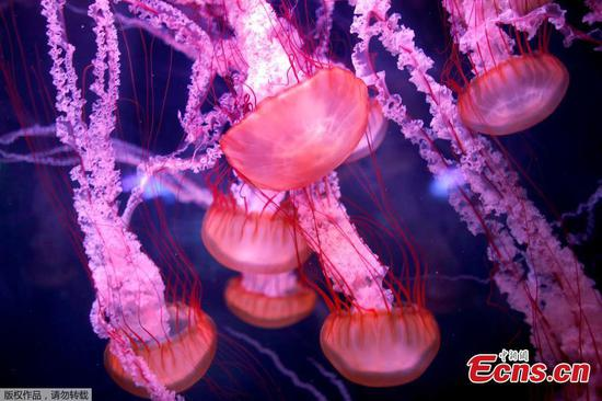 Aquarium of Paris opens new jellyfish section