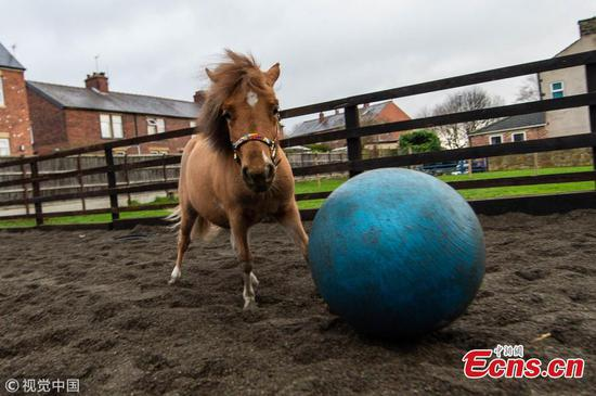 Tony the pony becomes fantastic footballer