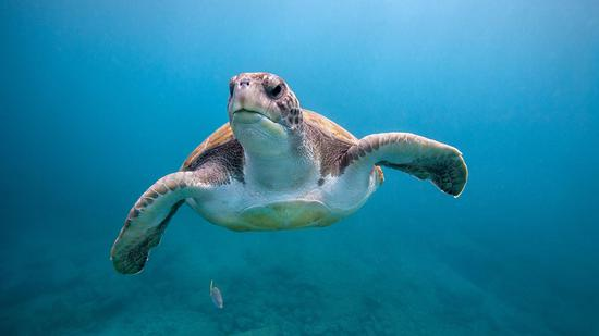 What else is needed to protect green turtles?
