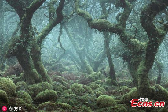 Photographer captures enchanted forests of Wistman's Wood