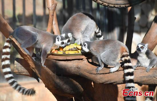 Zoo offers festive treat for animals
