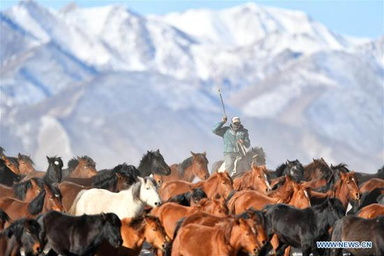 View of Shandan Ranch in Zhangye, NW China's Gansu