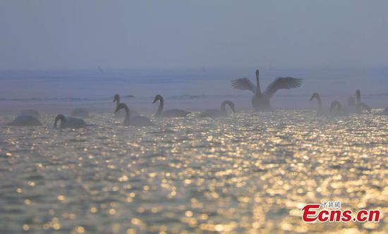 Qinghai Lake contributes to biodiversity conservation
