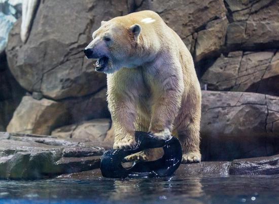 朴槿惠扮演对北极熊的媒人