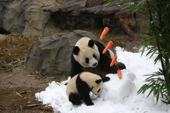 Giant panda base creates snow playground