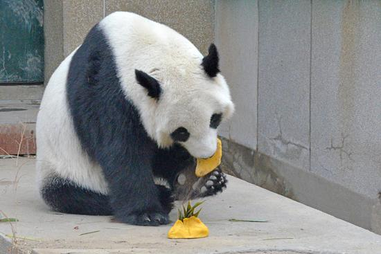 Dumplings made for animals at Tianjin Zoo