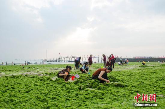 Algae fully shrouds beach in southern city
