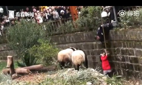 Girl saved from giant panda pen as bears close in