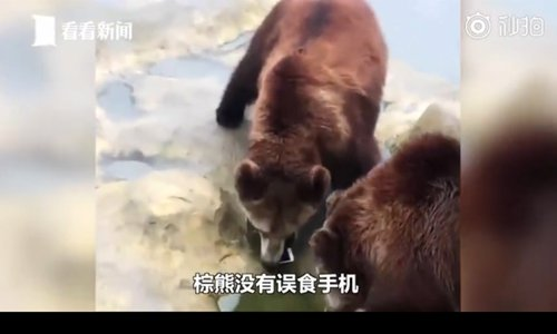 A brown bear smells the iPhone that is tossed by a visitor in the bear enclosure in Changzhou, Jiangsu Province. (Screenshot photo/Kankan News)