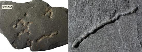 Geologists find oldest evidence of life's mobility on Earth