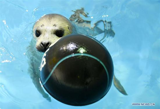 New-born seal cub at Harbin Polarland