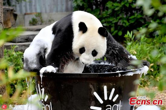Panda Wang Wang enjoys bubble bath
