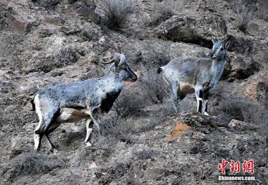 自然保护区是野生动物数量不断增长的家